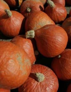 pumpkins-250