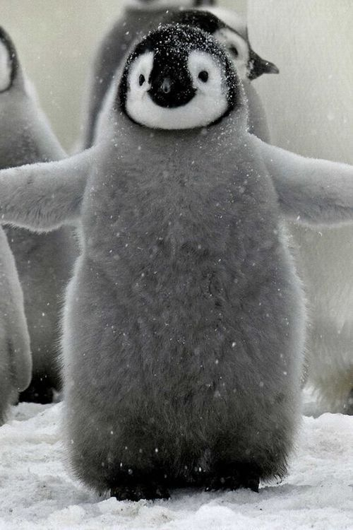 Hugging penguin