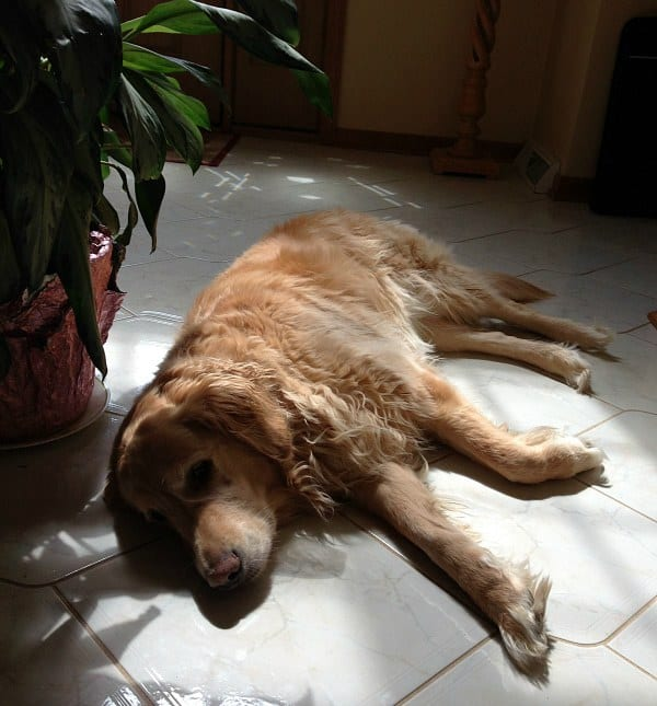 Einstein in his sun spot!