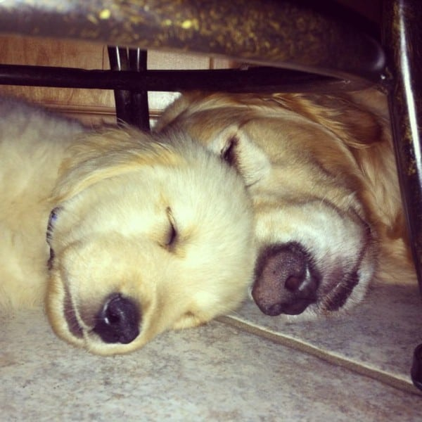 Duke & Einstein sleeping