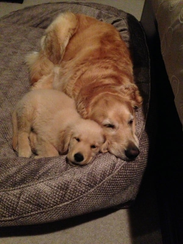Bed Buddies!