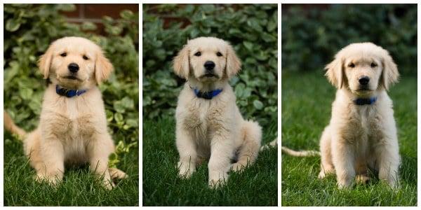 Duke at 9-weeks, 10-weeks and 11-weeks