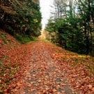 walking-trail-250