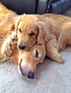 Duke & Einstein snuggling