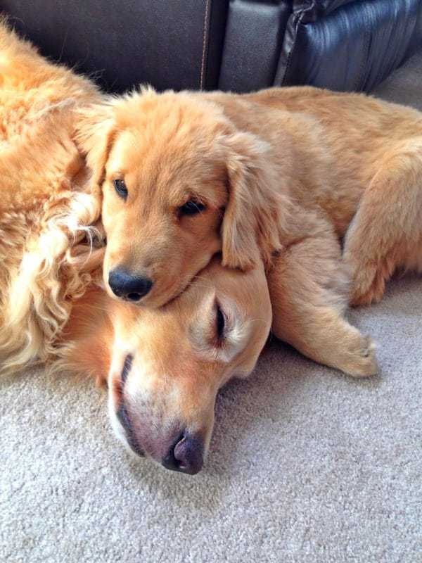 Duke & Einstein snuggling