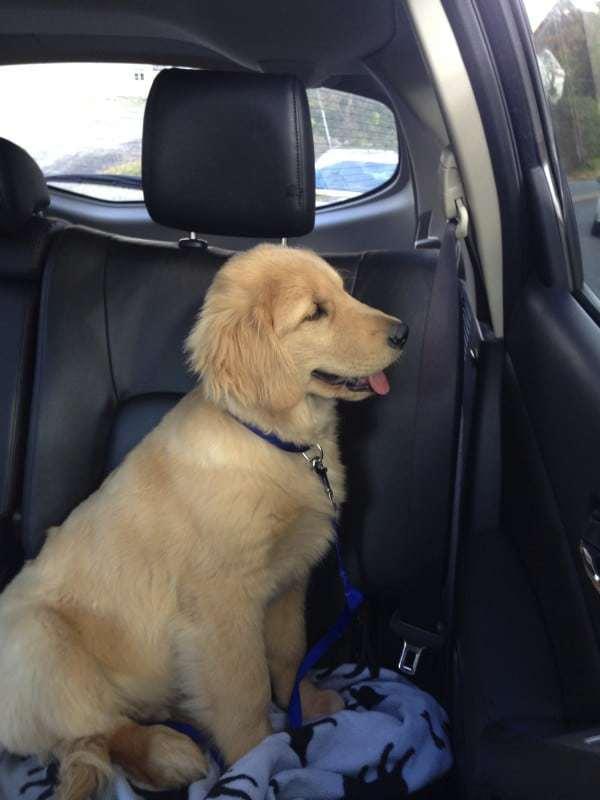 Duke - 4 months - vet