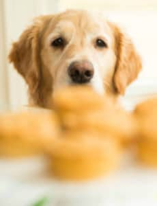 Doggie Pupcakes with Yogurt-Peanut Butter Frosting {Happy 7th Birthday, Einstein!}