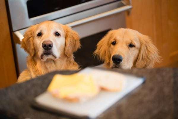 Food Bandits!