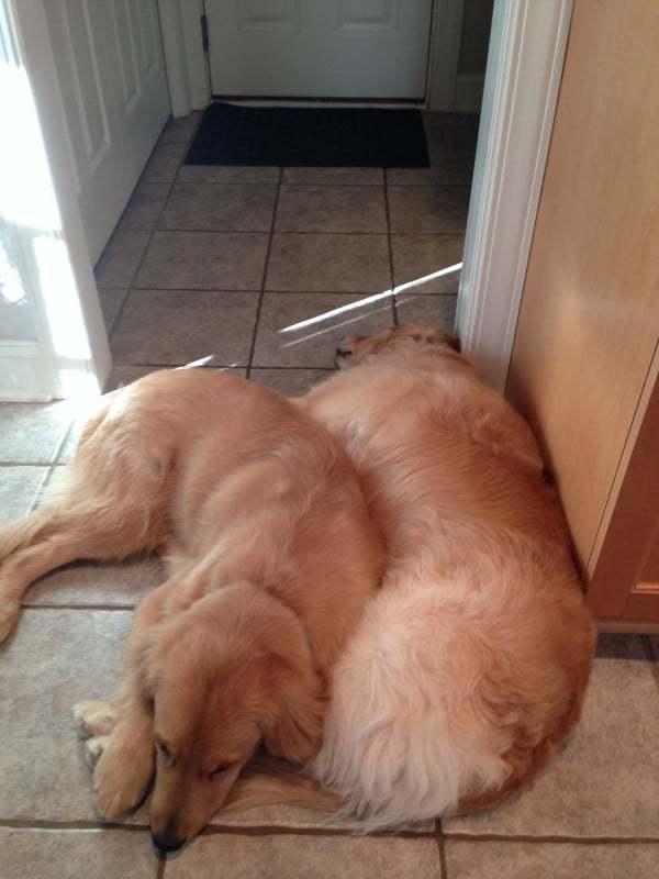Einstein and Duke snuggles