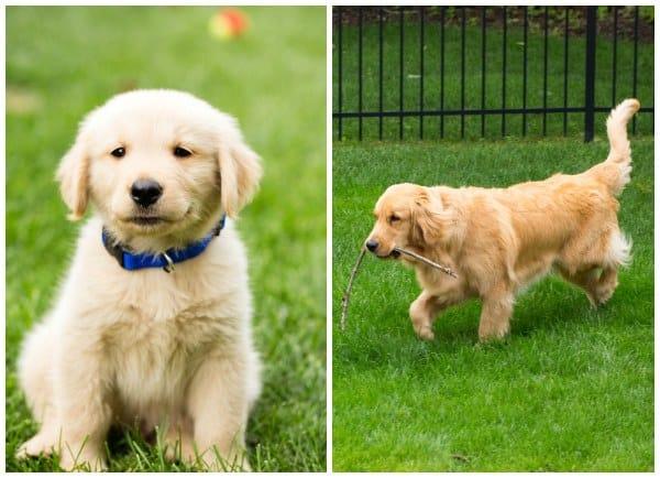 Duke - 1 year later!