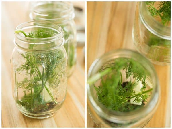 Quick & Easy Refrigerator Dill Pickles | browneyedbaker.com #recipe #summer #canning