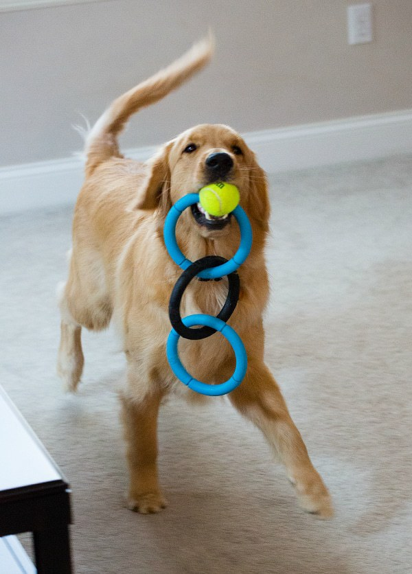 Duke can't possibly have enough toys