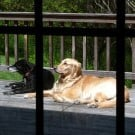 Einstein and Bella sunning themselves on my mom's deck