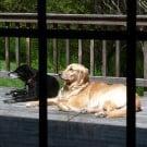 Einstein and Bella sunning themselves on my mom's deck