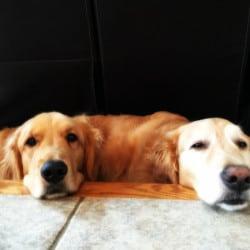 Duke & Einstein hanging out | browneyedbaker.com