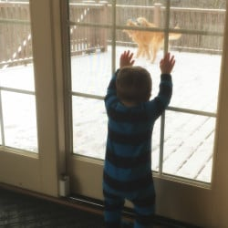 Joseph dying to go outside and play with Duke and Einstein!