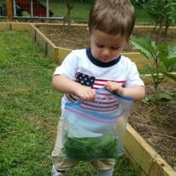 Joseph helping collect harvest in grandpap's garden