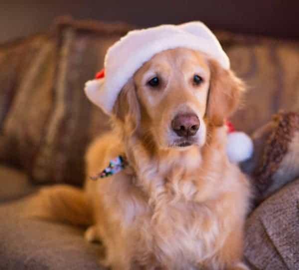 christmas2012-111