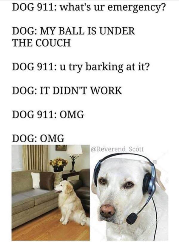 dog911
