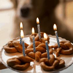 Sweet Potato Pretzel Dog Treats {Happy 6th Birthday, Einstein!}