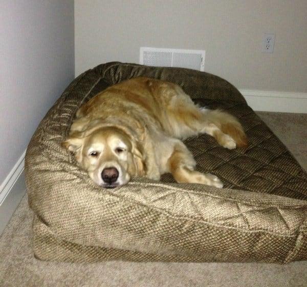 Einstein in his new bed!
