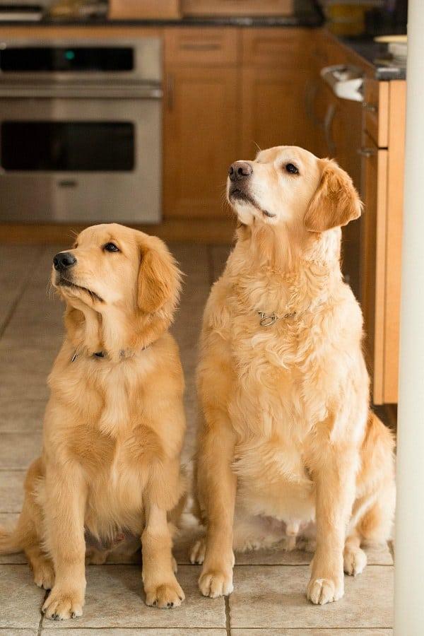 Einstein & Duke, freshly groomed