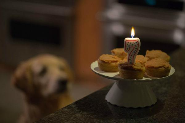Doggie Pupcakes with Yogurt-Peanut Butter Frosting for Einstein's 7th Birthday by @browneyedbaker :: www.browneyedbaker.com