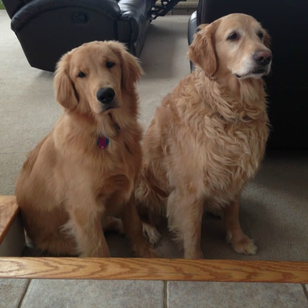 Duke & Einstein back home!