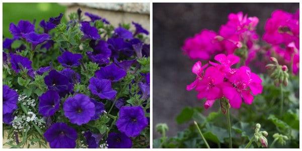 flowers-june2014