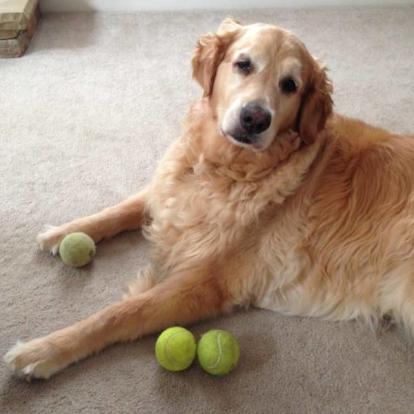 We have a tennis ball hoarding situation