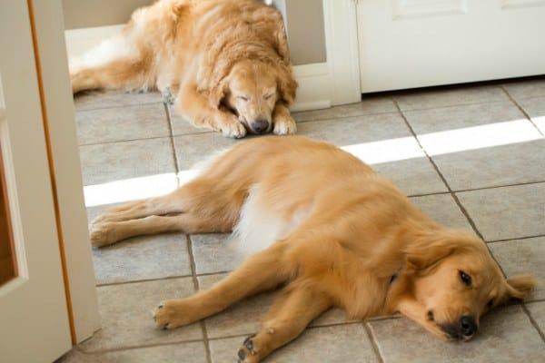 Einstein & Duke - Home Sweet Home