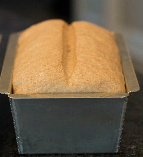 whole-wheat-sandwich-bread-48-550