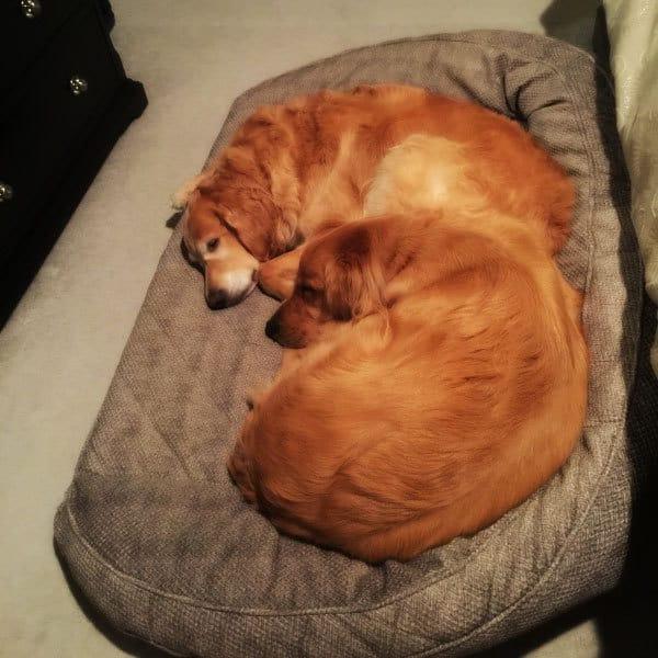 Einstein and Duke bedtime | browneyedbaker.com