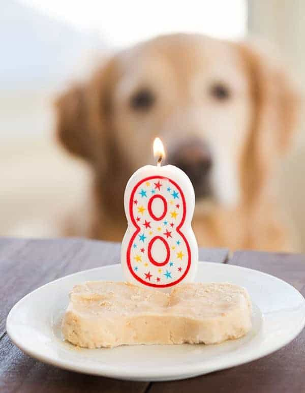 Frozen Peanut Butter-Yogurt Dog Treats for Einstein's 8th Birthday! | browneyedbaker.com