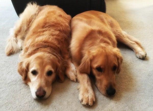 Einstein and Duke! | browneyedbaker.com