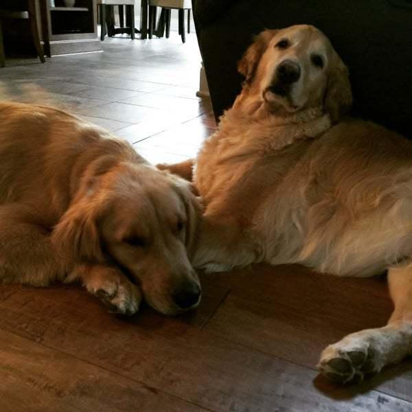 Duke and Einstein - freshly groomed! | browneyedbaker.com
