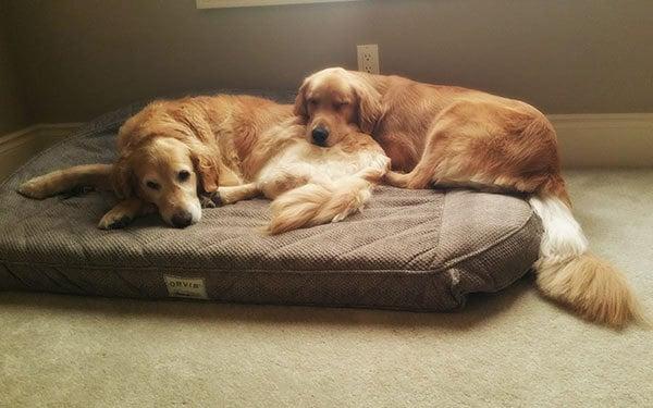 Einstein and Duke morning snuggles | browneyedbaker.com