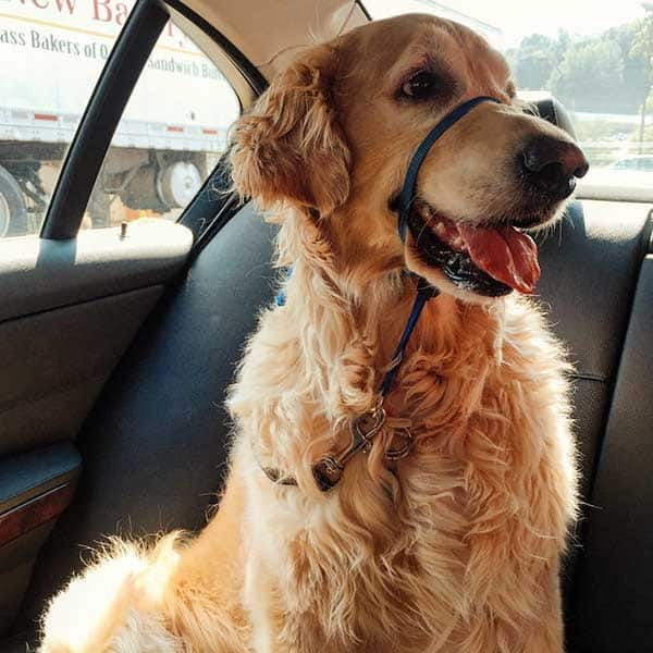 Einstein enjoying a ride to the vet | browneyedbaker.com