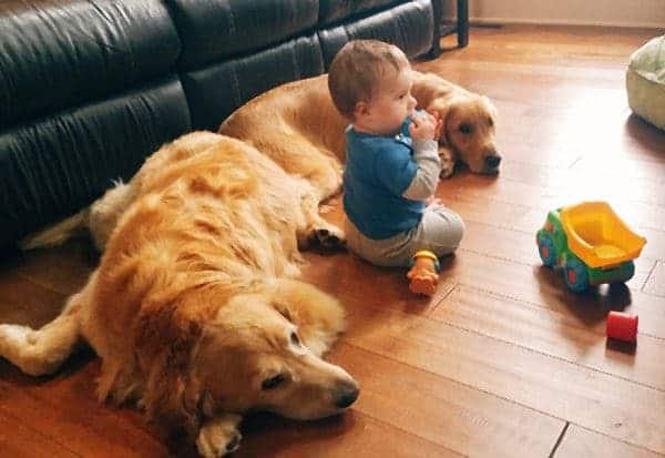 Joseph playing with Einstein & Duke keeping an eye on him