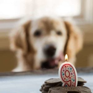 Mint-Buckwheat Homemade Dog Treats for Einstein's 9th Birthday! | browneyedbaker.com