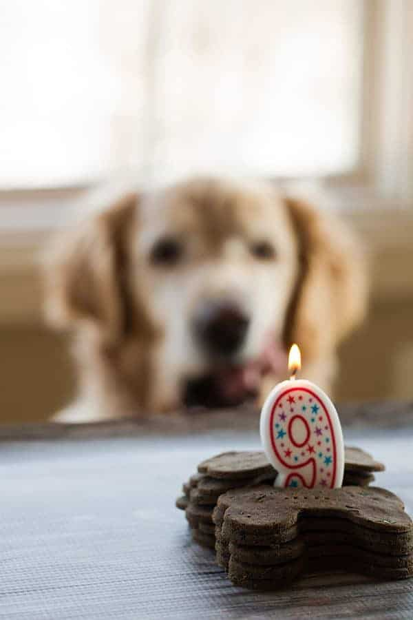 Mint-Buckwheat Homemade Dog Treats for Einstein's 9th Birthday! | browneyedbaker.com
