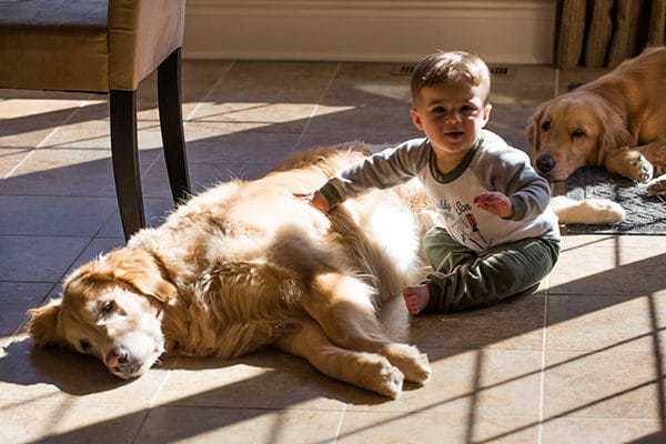 Joseph - 13 months - with Duke and Einstein