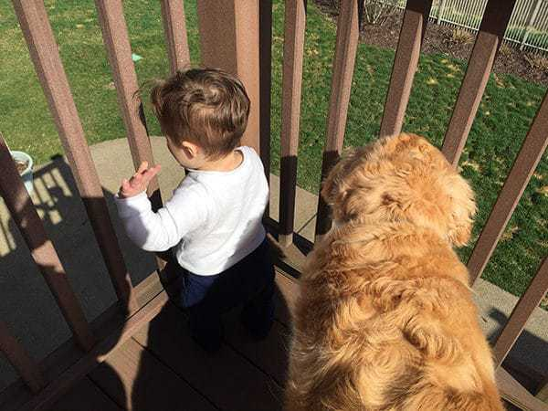 Joseph and Einstein hanging out on the deck