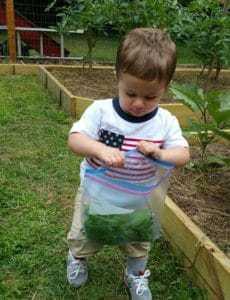 Joseph helping collect harvest in grandpap's garden
