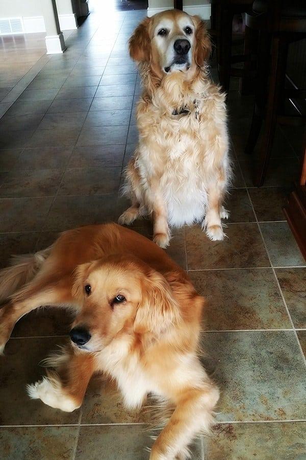 Einstein and Duke rocking some crazy attitude