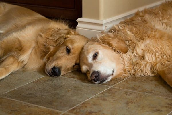 Duke and Einstein napping together