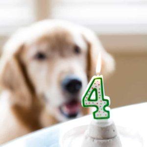 Frozen Pupcakes for Duke's 4th Birthday!