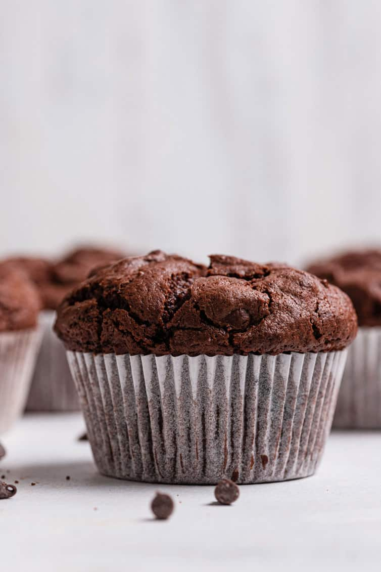 A single chocolate muffin shot straight on.