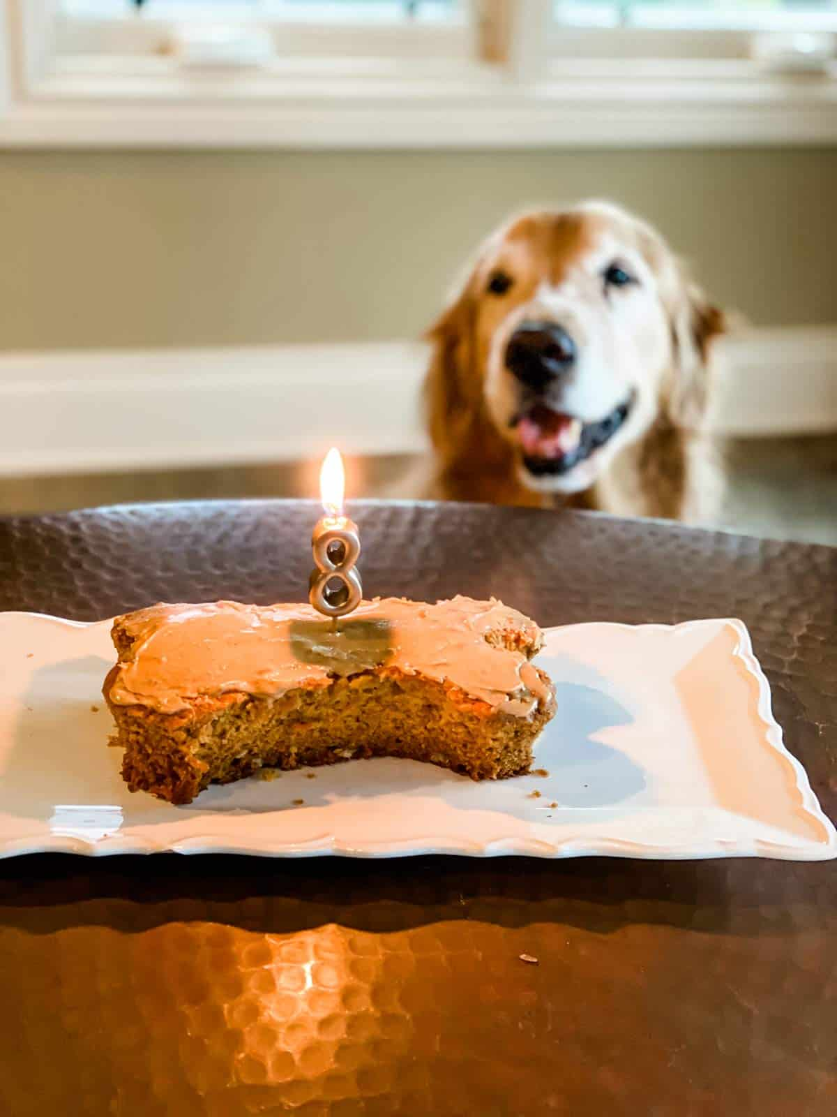Bone shaped dog cake with number 8 candle in it and dog in background.